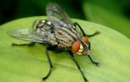 BIODIVERSITE: L'utilité des mouches dans la nature