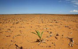 EAU: l'Afrique de l'Est assoiffée par le manque de pluie