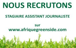 Stage: Assistant journaliste