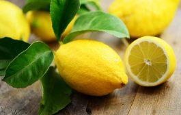 BIODIVERSITÉ: Le citron, un fruit aux multiples vertus
