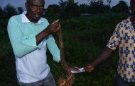 BIODIVERSITE : Comment protéger le pangolin en Côte d'Ivoire?