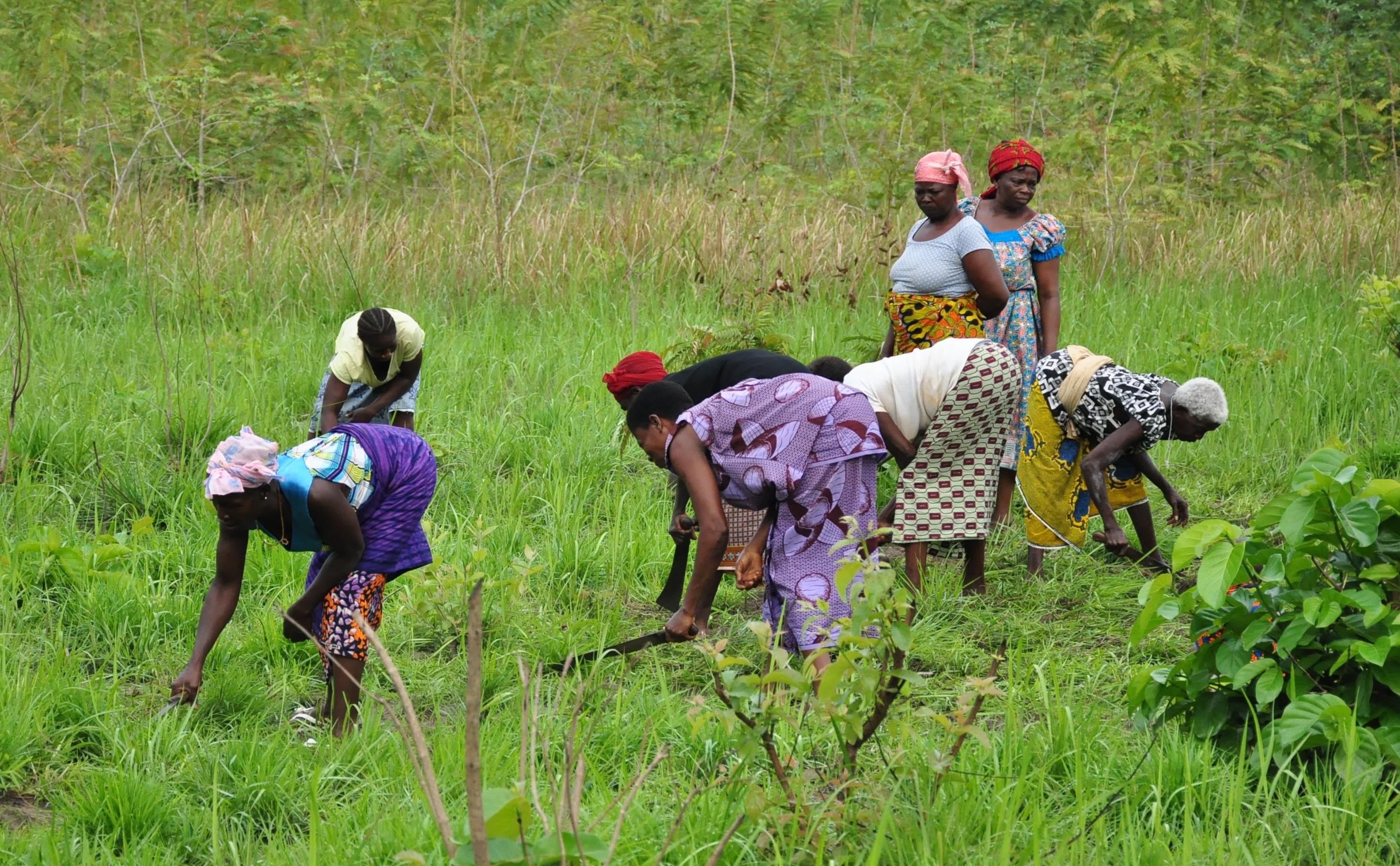 AGRICULTURE : La FAO déplore l'inégalité des sexes dans le droit foncier en Côte d'Ivoire