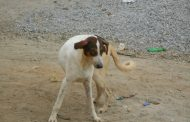 SANTE : attention aux chiens errants, la rage toujours actualité