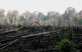 CÔTE D'IVOIRE : L'un des taux de déforestation les plus rapides au monde