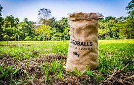 REBOISEMENT : SEEDBALLS Côte d'Ivoire veut reboiser 500 000 hectares de forêt avec une nouvelle technique