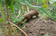 BIODIVERSITE : 1 million d'espèces risquent l'extinction