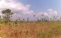 AGRICULTURE : La Banque Mondiale prévoit un investissement de plus de 5 milliards de dollars dans les zones arides d'Afrique