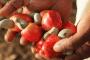 Innovation: un gel pour pallier au manque d'eau en Afrique du Sud