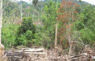 FORET : UTZ et RAINFOREST ALLIANCE soutiennent le plaidoyer pour l'application du code forestier en Côte d'Ivoire