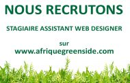Stage: Assistant Web designer