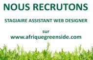Stage: Assistant Web designer