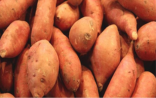 BIODIVERSITÉ: 7 vertus et bienfaits de la patate douce