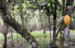 FORET: Lancement du cadre d'action commune Cacao-Forêts en Côte d'Ivoire