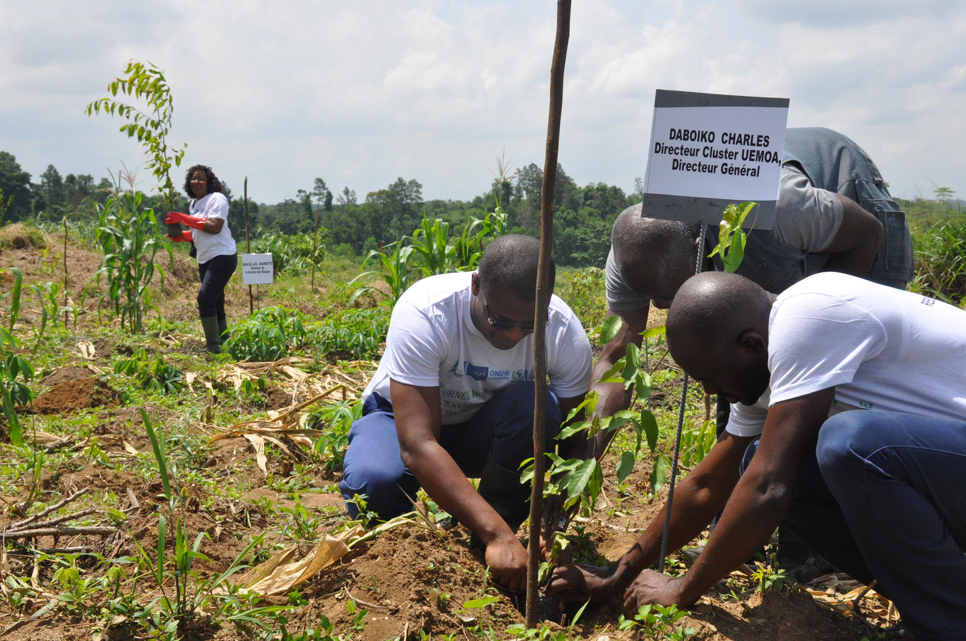 Environnement : ECOBANK reboise deux hectares de forêt à Abidjan