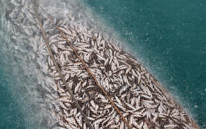 FAUNE AQUATIQUE : Quand la pêche aux petits poissons appauvrit les eaux ivoiriennes