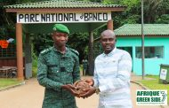 FAUNE : L'ONG AMISTAD récupère  un pangolin et le relâche dans le parc du Banco