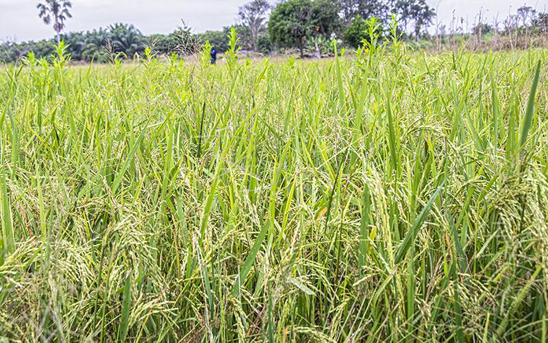Agriculture : La Banque Mondiale prône une agriculture intelligente pour lutter contre la pauvreté et l'insécurité alimentaire dans le monde