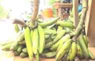 AGRICULTURE : une augmentation de plus 30% de production agricole annuelle pour assurer la sécurité alimentaire en Afrique