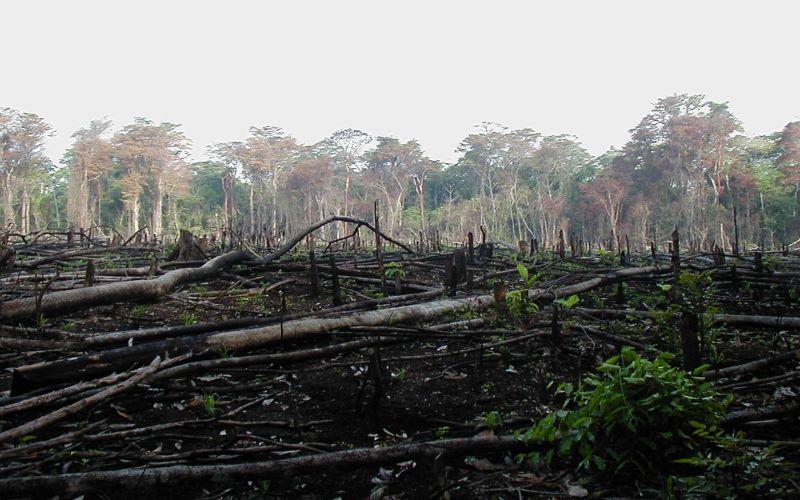 FORET : L'Europe à l'origine de 16% de la déforestation liée au commerce
