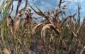 """Environnement : Selon l'ONU, la sécheresse est la """" prochaine pandémie """""""