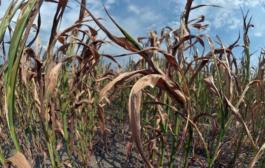 Environnement : Selon l'ONU, la sécheresse est la