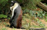 BIODIVERSITE : 34 espèces fauniques de la Côte d'Ivoire rejoignent la liste rouge UICN