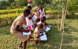 Le jardin de palmiers de Divo: un début de solution pour la domestication des palmiers