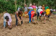 LUTTE CONTRE LA DEFORESTATION : Un chercheur ivoirien préconise l'agriculture durable en Côte d'Ivoire
