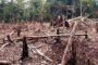 BIODIVERSITE : Le triste déclin de la flore Ivoirienne